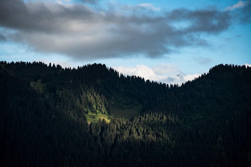 blue sky forest with center focus sunlight
