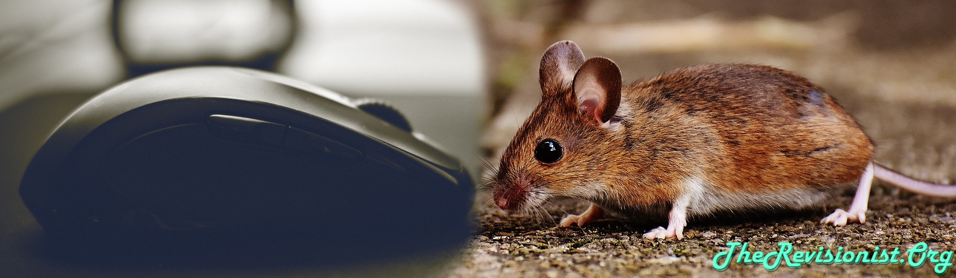 computer mouse vs real animal cute mouse
