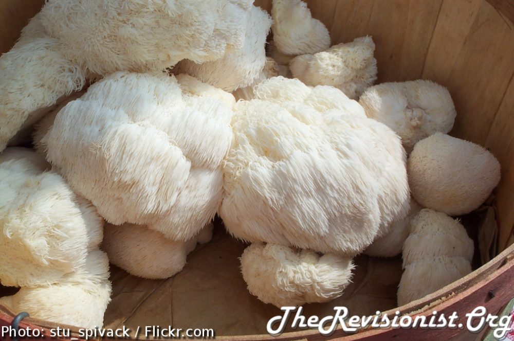 Lion's Mane's Powerful Healing Effects on Health & Cognition