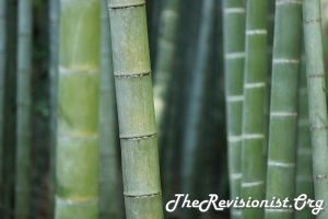 close up of many bamboo trunks that have white or black bands outlining the segments and white powdery plant wax ontop