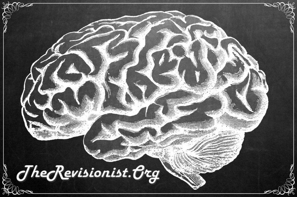 Different Functions of the Brain by Anatomy - The Revisionist